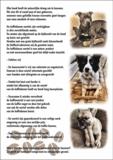 I&I Pet Supplies Koffieboom kauwwortel L _